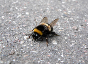 humble, bumblebee, selfless